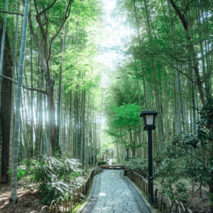 #竹林の小径 #竹の円型ベンチで休憩