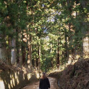 #日光杉並木 #木漏れ日