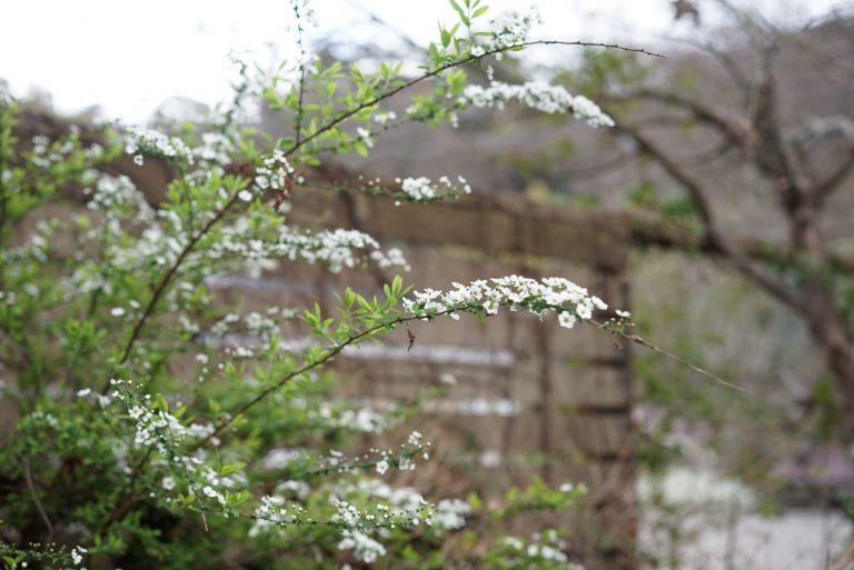 桜が満開になる前にひっそりと咲いている「春の花」のお話。