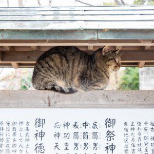 #岡山瀬戸内野良猫 #五香宮