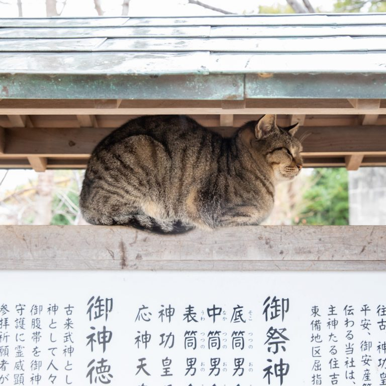 岡山瀬戸内野良猫