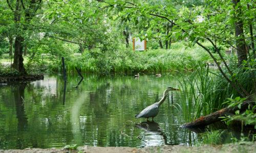 石神井公園_3