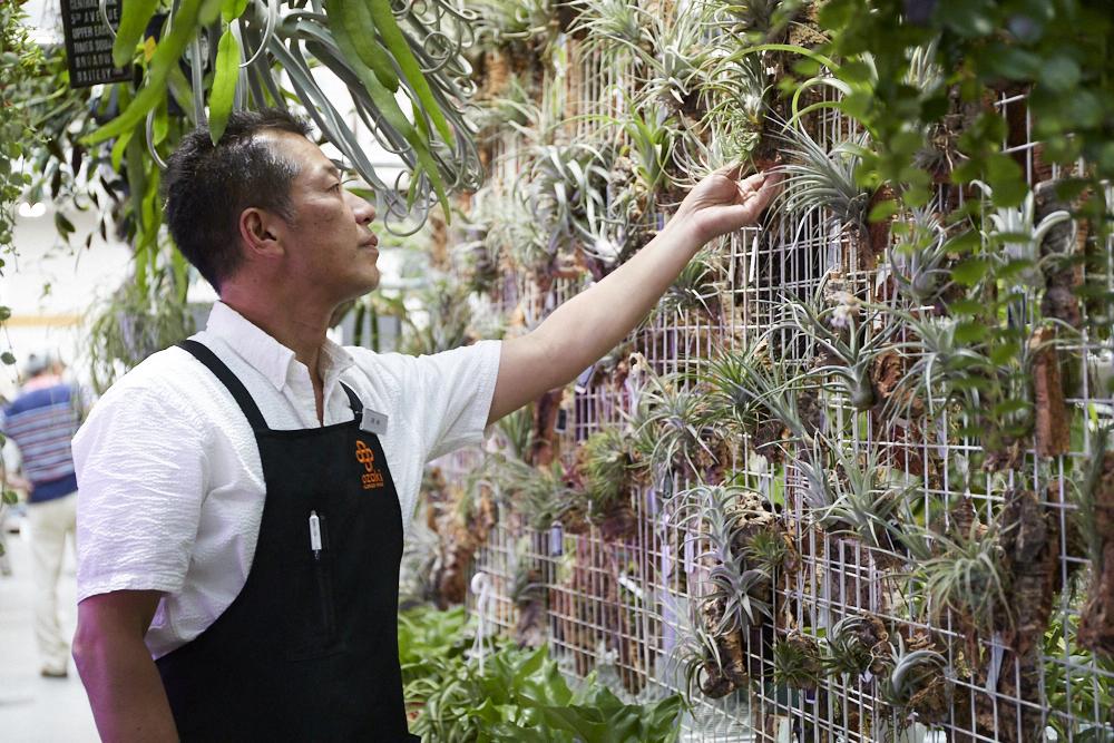 2Fの「Indoor Garden」内にある観葉植物コーナー。「植物の管理方法は近くのスタッフに気軽に聞いてください」(尾崎さん)。
