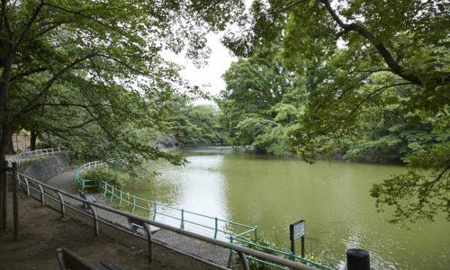 まわりが遊歩道になっている、ひょうたん型の大きな池が見どころ。「ここには若いときからよく来ています。お弁当を食べたり、犬の散歩をしたり。行くとほっとする馴染みの場所です」(尾崎さん)