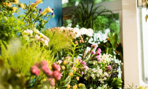 切り花だけでなく、多肉植物や観葉植物、天井から吊られたドライフラワーも印象的な、シックなお花屋さん〈ハロガロ〉。花に魅せられて転職、地元で起業した成瀬拓也さんがオーナーです。