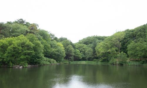 西武多摩湖線「西武遊園地」駅から徒歩わずか5分。駐車場も充実しているので、クルマでも。アクセスが非常によいところも魅力の公園です。住所:東京都東村山市多摩湖町3-17-19(管理所)