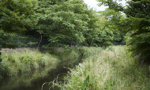 「平成の名水百選」に東京都で唯一選定されている落合川と南沢湧水群は、「水と緑の街」をテーマに掲げる東久留米市の象徴ともいえる存在。東久留米駅のすぐそばに、こんな景観が広がっているとは驚きです。
