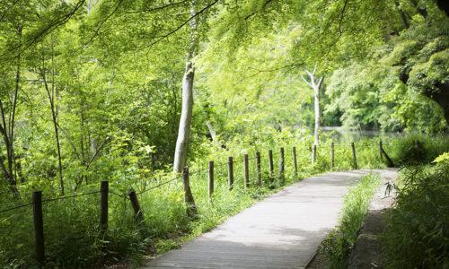 樹林におおわれた池は、四季それぞれに美しい景色が広がっています。池のほとりにめぐらされた木道は、森林浴をしながら自然観察を楽しめます。■住所:練馬区石神井台1-26-1 ■電話:03-3996-3950(石神井公園サービスセンター)