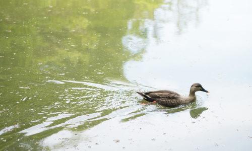 池の周囲にはベンチもあり、森の木陰で読書をしたり写生をしたり、バードウォッチングをしたりと、豊かな自然に引き寄せられるように思い思いに過ごす人が集まり、ボート池より静かで落ち着いた雰囲気が漂います。