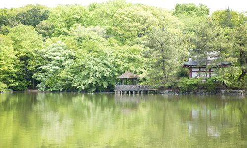 「石神井公園にはボート池と三宝寺池の2つの池がありますが、三宝寺池の鬱蒼とした深い森は貴重です」(小森さん)。芝生の広場がある松の風文化公園や「井のいち」が開催される氷川神社も隣接。