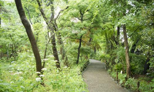 「植物学者、牧野富太郎の自宅跡地が開放された施設。木々の中を歩いているだけで気持ちよくなれます。入園無料なので、〈copse〉に来たついでに気軽に寄り道してみてください」(小森さん)。