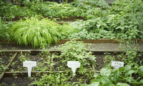 庭園には、300種類以上の草木類を植栽。スエコザサやセンダイヤザクラ、ヘラノキなどの珍しい種類の植物も数多くあり、学問的にも貴重なものと評されています。