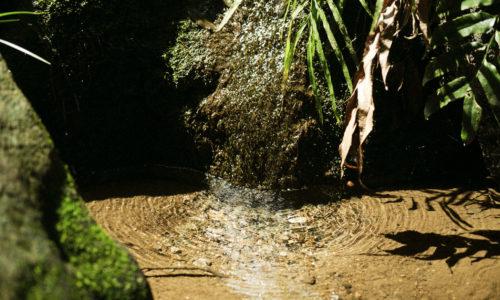 中央部にある谷間には東京の名湧き水57選にも選ばれた湧き水もあり、江戸時代にはホタル狩りの名所としても知られていました。そこで昭和48年からホタルの飼育をはじめ、昭和53年からはホタルの観賞会を開催。毎年7月上旬には園内でホタルを見ることができます。