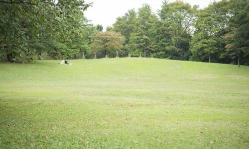 夏には水遊びのできる噴水広場や、ピクニックに最適な広い芝生の陽だまりの広場、子どもたちが遊べる遊具や、陸上競技場やナイターもできる野球場なども完備。バードウォッチングができる野鳥の森もあります。
