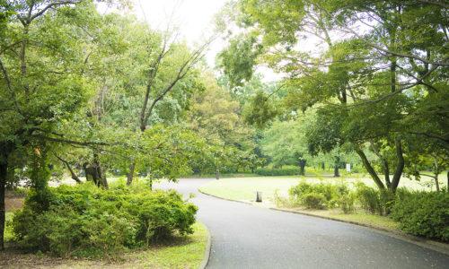 もともとは旧陸軍士官学校の敷地の一部だったという大泉中央公園は、さまざまな楽しみ方ができる地元住民の憩いの場。ひとりで走りに行ったり、家族で遊びに行ったり、従業員とバーベキューを楽しんだりと、森本さんも大いに活用している様子。