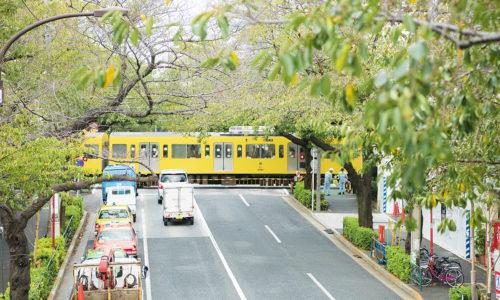 〈カタリナ〉の近くにある中野区新井四丁目の歩道橋は、西武鉄道新宿線が走る姿と桜並木が見られるベストスポットとして知られています。春ともなれば橋の上は大混雑に。きっとカメラを向けたくなるはずです。