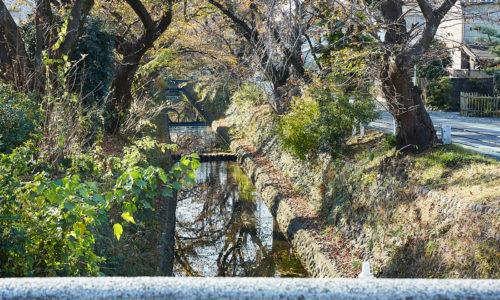 もう一つ、近隣のお花見スポットといえば、「所沢航空記念公園」。園内にはソメイヨシノが約500本も。そこから東川にかけて歩くとほどよい距離で、秋には、色づいた葉が至るところで見られ、お散歩コースにもぴったり。