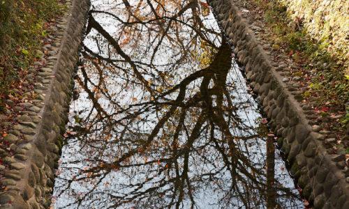 「東所沢の手前までずっと桜並木が続いています。桜の咲くシーズンは本当にきれいなんですよ。夜は提灯も飾られるので、ライトアップで夜桜も楽しめますよ」。住所:埼玉県所沢市西新井町~松郷あたり
