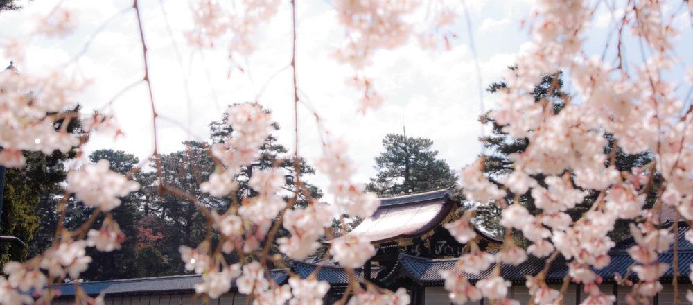 2019年日本最美櫻花名所就在京都!當地人推薦必去的5處賞櫻景點。