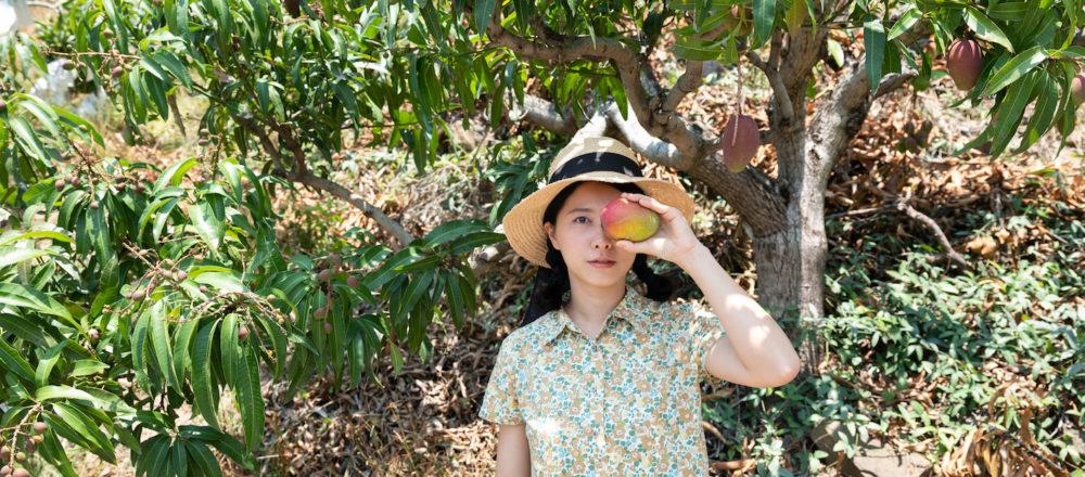 令人期待的芒果季來臨!走訪屏東最受歡迎的愛文芒果農家。