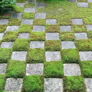 【京都】日本獨有的林園美學,洗滌心靈的京都苔庭,悄悄掀起風潮。