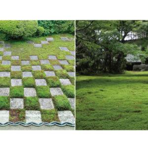 【京都】日本獨有的林園美學,洗滌心靈的京都苔庭,悄悄掀起風潮——Hanako Taiwan