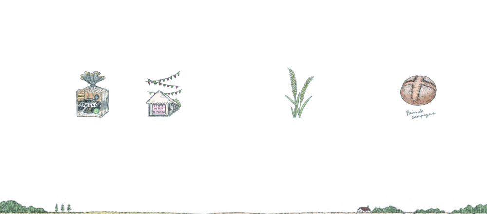 理想小麥的前世今生 北海道小麥的動人故事