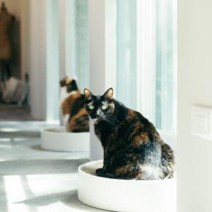 療癒你療癒我 不管貓咪理不理,光看著就能療癒一整天 。真像極了愛情。