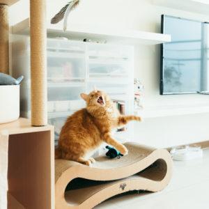 療癒你療癒我 養貓像是多了個家人,一起耍廢放空每一天