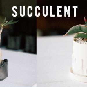 讓植物在室內也可以快樂生長的培育法