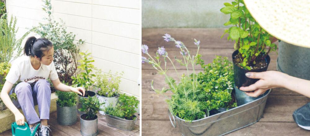 變身居家小園丁,必須了解照顧家庭菜園的3大重點筆記!-Hanako Taiwan
