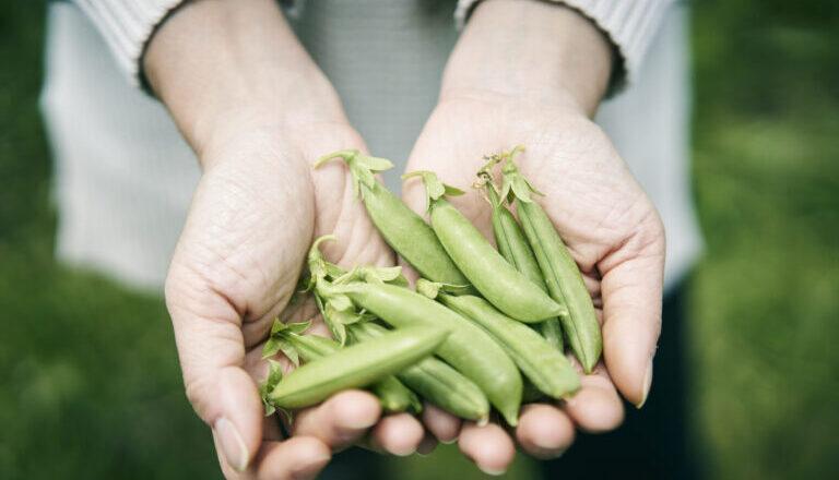 「八一農園」使用免耕栽培讓土壤重生,當雙腳踏上富饒土地,胼手胝足體會培育農作物是如此自然美妙!-Hanako Taiwan